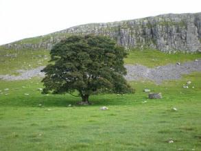 Photo: PW - Great Close Hill near Malham Tarn