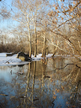 Photo: Trees reflected in a pond with a stone bridge at Eastwood Park in Dayton, Ohio.