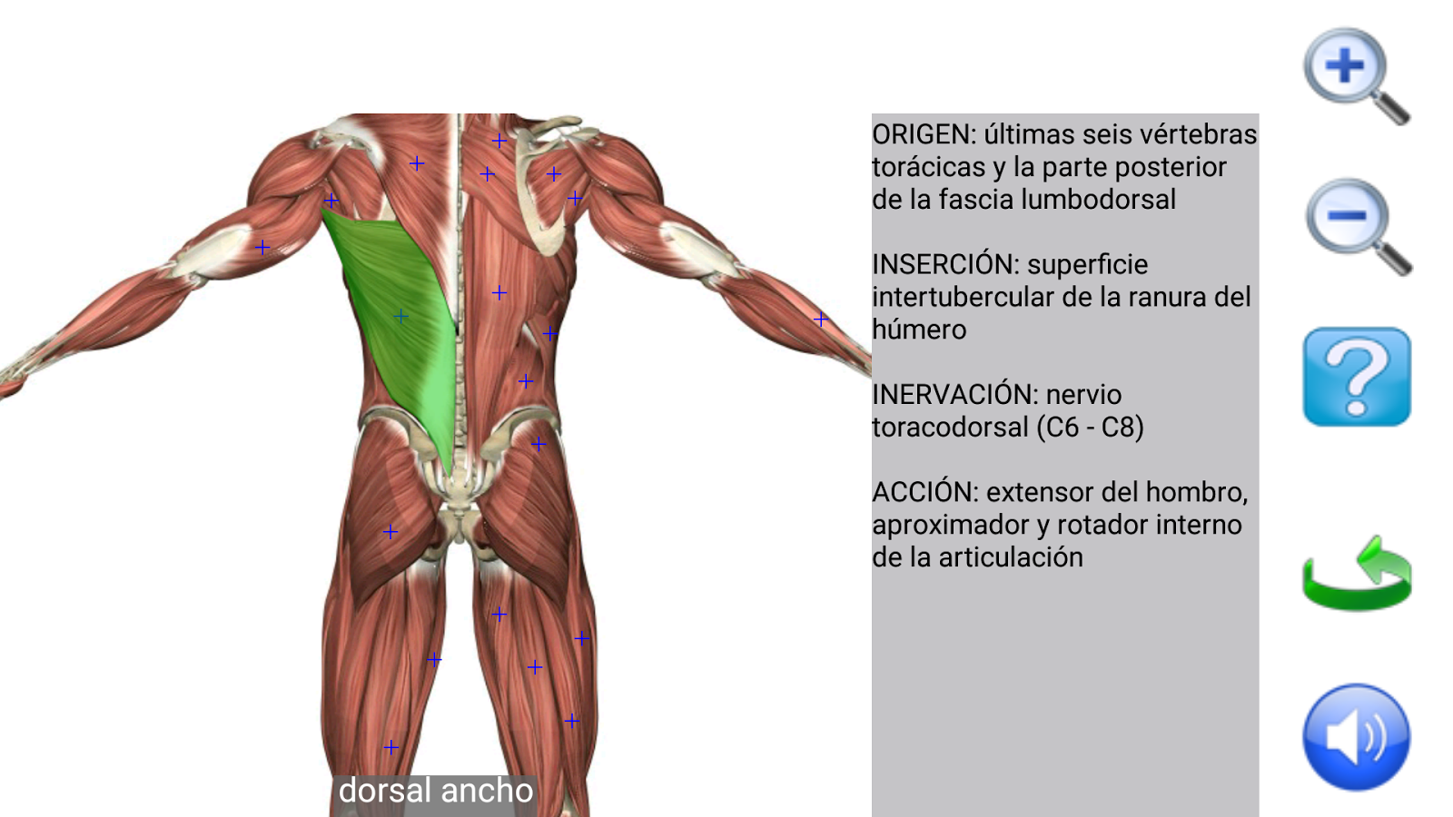Visual Anatomy Free: captura de pantalla
