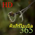 365 คัมภีร์ไบเบิล HD icon