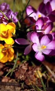 Springs Flowers LWP - náhled