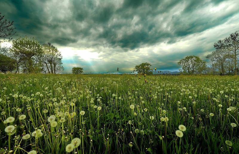 Pioggia e vento di primavera di Paguzzi