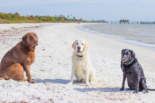 Sitting by Meaghan Browning - Animals - Dogs Portraits ( dogs, ocean, beach, labrador, together )