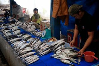 Photo: Pasar Bolu – Mercado de ganado. Bolu (Tana Toraja, Sulawesi, Indonesia) Martes 24 de marzo de 2015