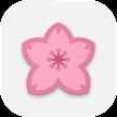 Sakura Flowers Falling Live Wallpaper HD APK
