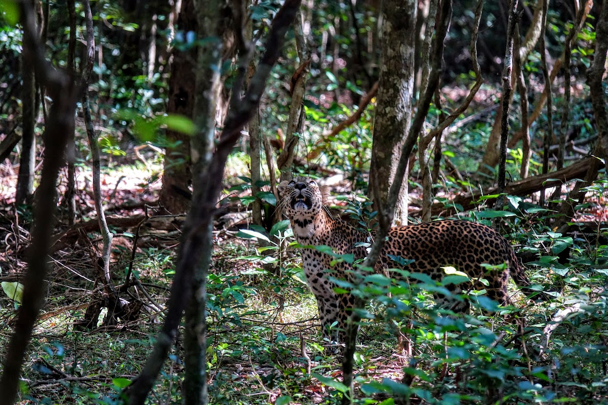 Sri. Lanka Wilpattu National Park . Maybe in the middle?