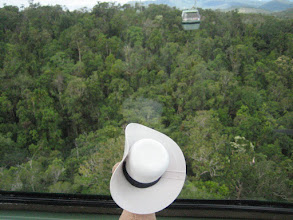 Photo: RRR takes a cablecar over the rainforest.