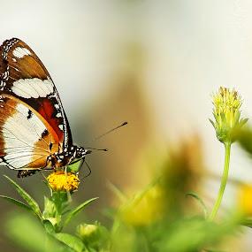 foraging by Rusman Budi Prasetyo - Animals Other ( animal, butterfy,  )