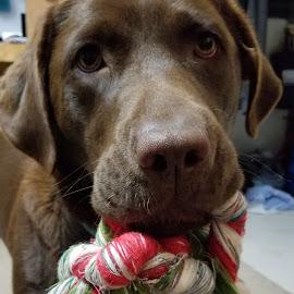 by Liz Huddleston - Animals - Dogs Playing (  )