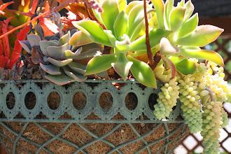Photo: Succulent Summer Sun: madeline 8x10