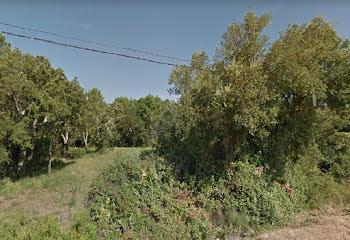 terrain à Lecci (2A)