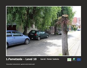 Photo: RO: 1. Toaletarea copacilor - Level 10 În orașul nostru este o educație horticulturală la nivel universitar!  EN: Prunning - Level 10 In our city is taking place a horticultural education in university-level.