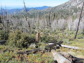 Photo: View south from Windy Gap Trail amidst Curve Fire damage from 2002