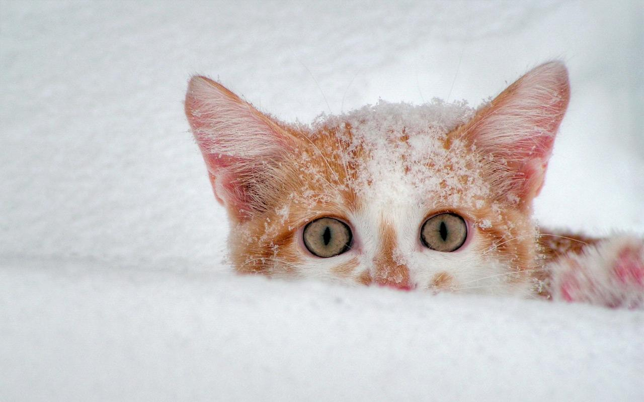 snow cats live wallpaper android apps on google play