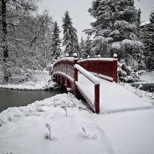 snijeg u botaničkom 11.jpg