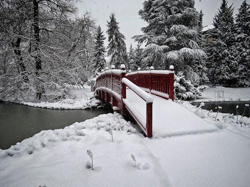 snijeg u  botaničkom vrtu 11 by Dunja Kolar - City,  Street & Park  City Parks ( botanički, croatia, zagreb, snijeg )