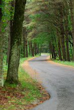 Photo: Road into Half Moon Pond State Park by Linda Carlsen-Sperry.