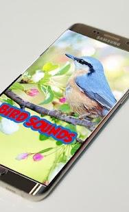 Bird Sounds Ringtones - náhled