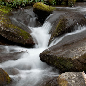 Meet in the Middle by Angela Moore - Landscapes Waterscapes ( water, national park, landscape, rocks, river )