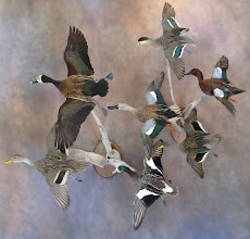 Photo: A collection of Argentina waterfowl