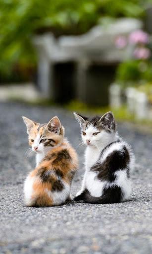 LWP 小猫
