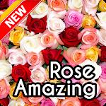 Beautiful Rose Wallpaper