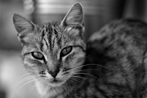 Young predator di piera_petrocelli