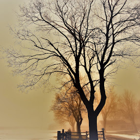 Tree in Fog by Ashish Gupta - Nature Up Close Trees & Bushes ( winter, nature, tree, fog, weather, ontario )