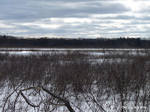 Photo: Buttonbush at river's edge