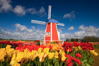 Photo: 10 Apr 2007, near Woodburn, Oregon, USA --- Windmill in Tulip Field --- Image by © Craig Tuttle/Corbis