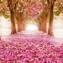 Spring Flowers Wallpapers HD Best New Tab
