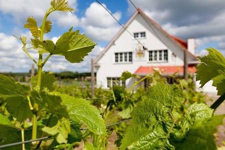 Vaderdag vieren bij een Hagelands wijntje en driegangenmenu