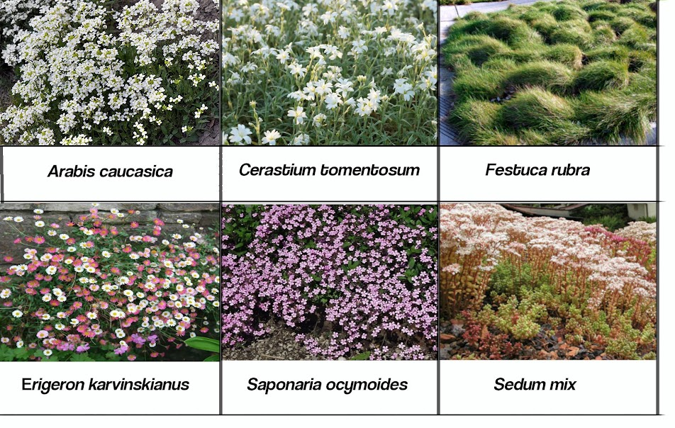especies que componen el jardín