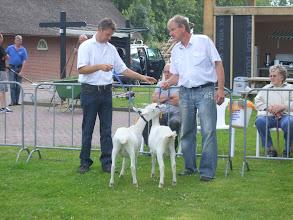 Photo: Rubriek 1: witte lammeren geboren na 10 februari 2012. 1a. Jokelina 32 1b. Celine 38.  Beide lammeren zijn van Kees Brabander.