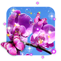 Orchid Spring icon