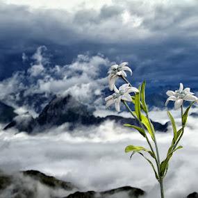 by Steve Isp - Landscapes Mountains & Hills