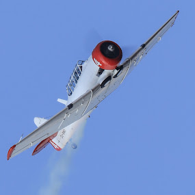 Harvard by Dirk Luus - Transportation Airplanes ( propeller, transport, airplane, aircraft, harvard,  )