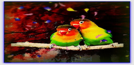 Love Birds Live Wallpaper Aplikasi Di Google Play