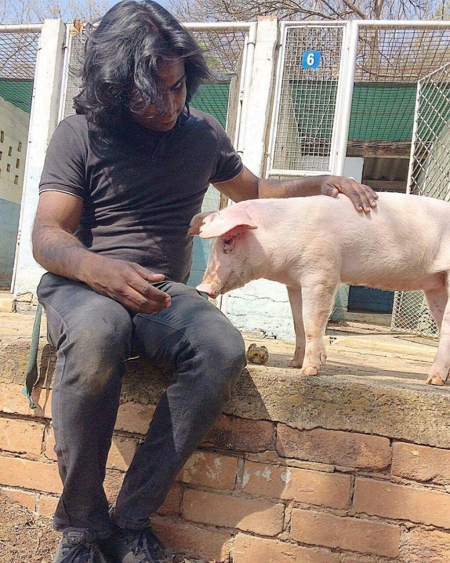 Babe the pig and her rescuer, Rekash Sinanin.