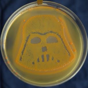 E.coli sur Drigalski