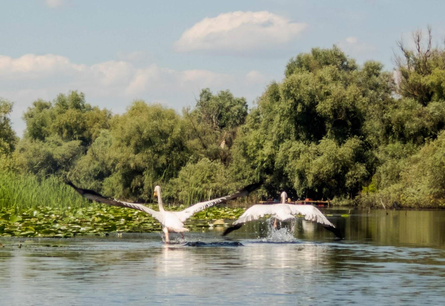 Cu caiacul de la Mahmudia la Sfântul Gheorghe (Delta Dunării)