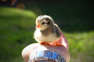 Photo: Chick