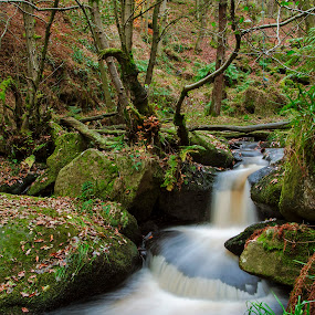 padley gorge 2 by Ray Heath - Landscapes Waterscapes ( colour, time, 1 seasons, autumn, locations, padley gorge, image, streams, type, derbyshire,  )