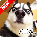 Funny Dog Pictures icon