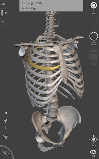 골격계 - 3D 해부도 – 인간 골격의 뼈