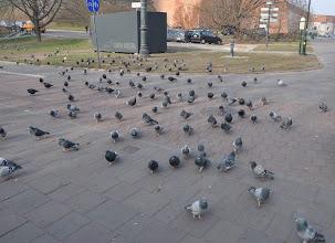 Photo: Cestou k muzeu v centru města nás doprovázeli holubi, kteří patří ke koloritu každého historického městského jádra v Evropě.