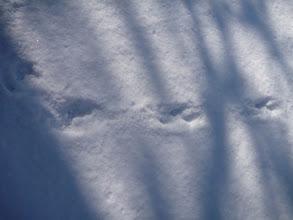 Photo: Auch IM Bahnhof sind Spuren zu sehen, die nicht von Hunden stammen.
