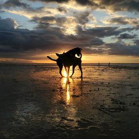Dog Heat! by Dickson   Shia - Animals - Dogs Playing (  )