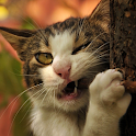 funny cat backgrounds icon