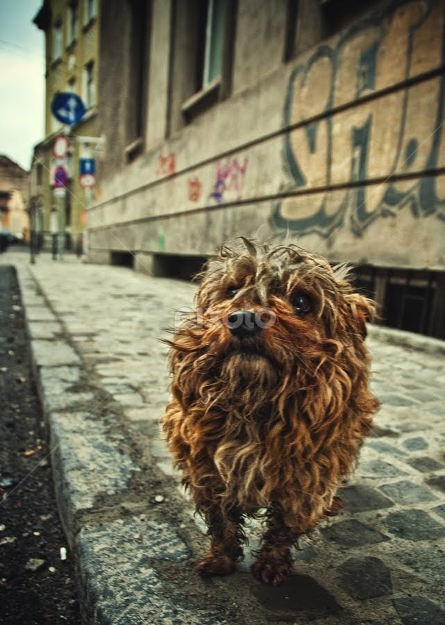 by Soran Sorin - Animals - Dogs Portraits ( street, dirty, small )